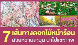 7 เส้นทางดอกไม้หน้าร้อน สวยหวานละมุน น่าไปแชะภาพ
