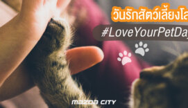 วันรักสัตว์เลี้ยงโลก