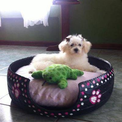 Dog_Beds 4